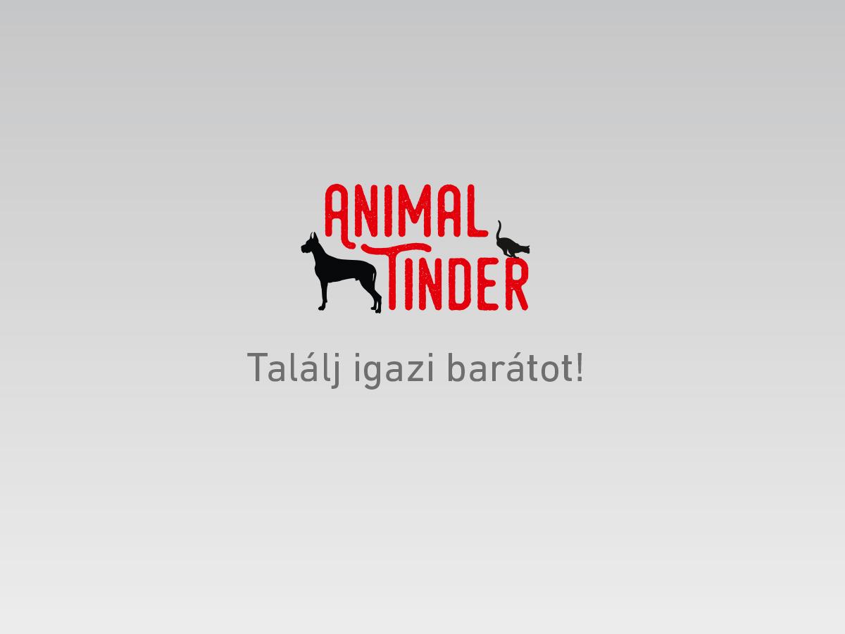 AnimalTinder1